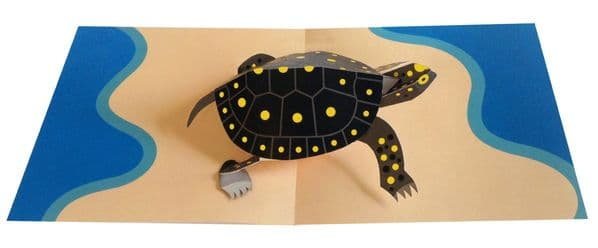 Animal Pops: Turtle
