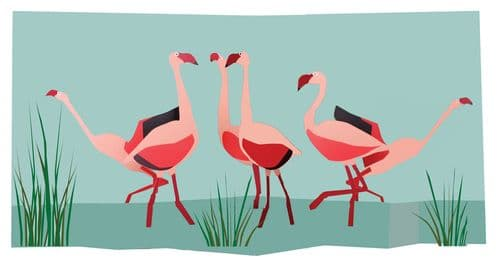 Birds: Flamingoes