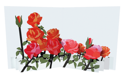 Flower Fields: Roses