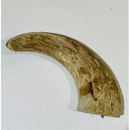 Anco Natural Lamb Horn Marrow