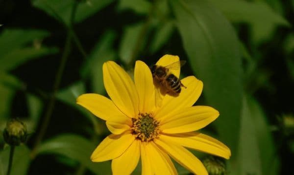 Adopt A Bee From:
