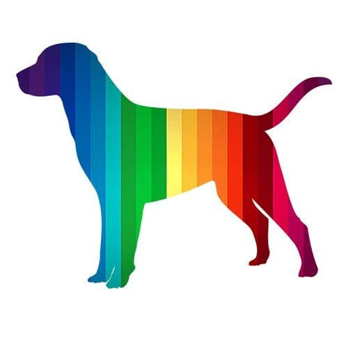 LGBT Pride Bandanas