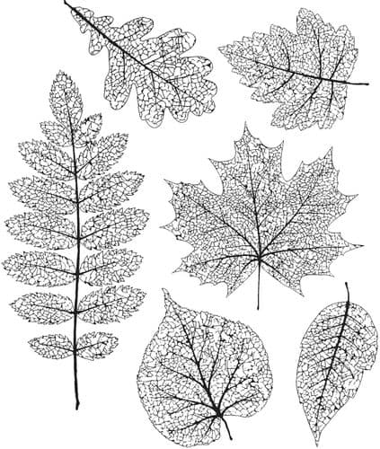 Tim Holtz - Rubber Stamps - CMS376 - Pressed Foliage